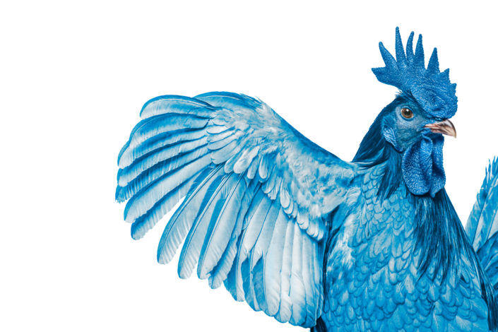 photography, studio photography, animal photography, advertising photography, healthcare industry photography, healthcare photography, healthcare provider, delaware blue hen, highmark, bcbs, delaware, ad campaign, advertising campaign