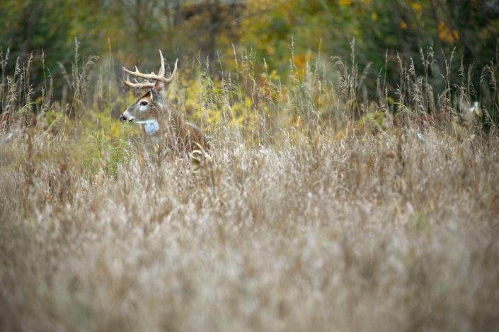 nature photography, animal photography, wildlife photography